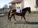 Photo de chevauxdarabie