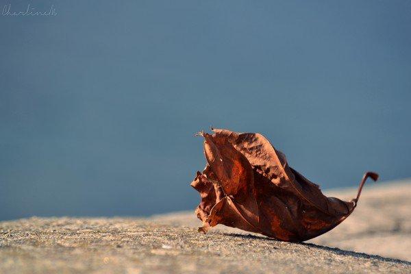 Preview de l'album : Dame Nature. Nikon D3100 - 55-200 mm.