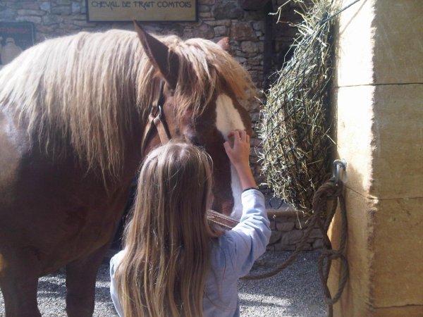 j'adore le cheval