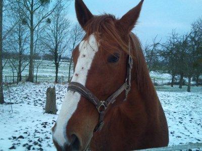 Une Ruru dans la neige
