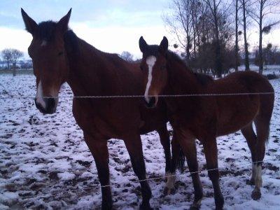 Une qia et une Bella dans la neige