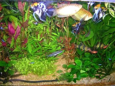 Mes poissons