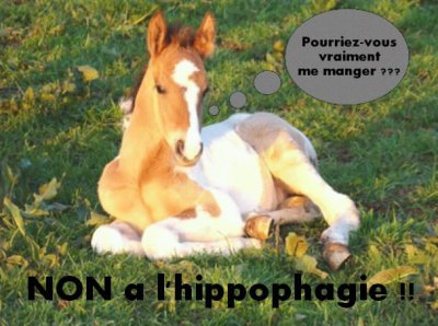 non à l'hippophagie