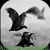 Photo de Aurora-Borealis
