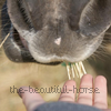 Photo de The-Beautiful-Horse