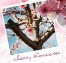 Photo de blossom-chan