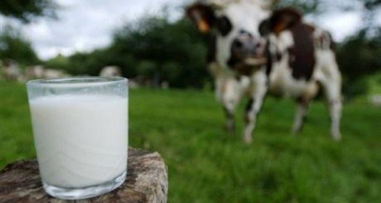 Une vache modifiée pour produire du lait humain... on arrête plus le progrès ou la déchéance