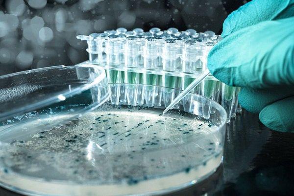 Monsanto utilisera bientôt le plus puissant outil de manipulation génétique dans la nourriture...