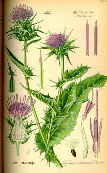 La Signification Des Plantes