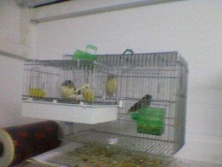 Chambre des oiseaux pendant la saison de reproduction
