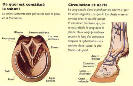 Anatomie des parties.(1) [Article#008]