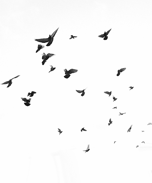 Blog de Dream-Hope-98 - Faut s'oublier. Nous déchirer. Nous ...