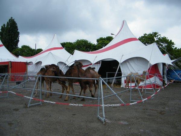 cirque arlette gruss à mulhouse 2014