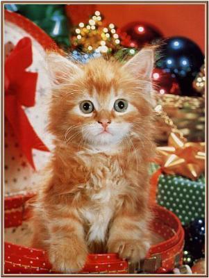 Pourquoi un chaton de deux mois pour noel chat - Image de chat de noel ...