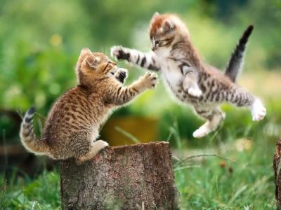 À moins de le tenir enfermé, il n\u0027existe aucun moyen sûr d\u0027empêcher les  querelles. Soyez prêt à soigner les blessures. Les chats se battent pour  défendre