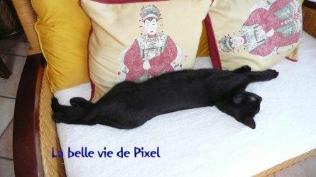 DES NOUVELLES DE PIXEL