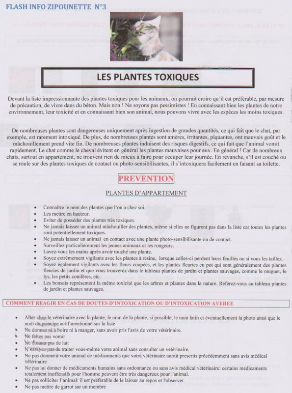 FLASH INFO DE LA ZIPOUNETTE N°11