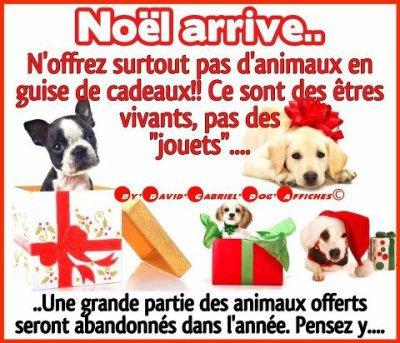 NON pas d'animaux en cadeau pour Noel