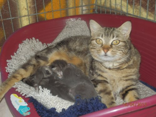 ESMERALDA et ses chatons