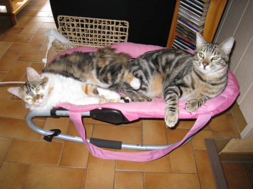DES NOUVELLES DE KITTY et RANGER