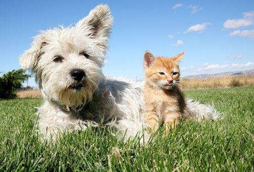 évolution du statut juridique de l'animal