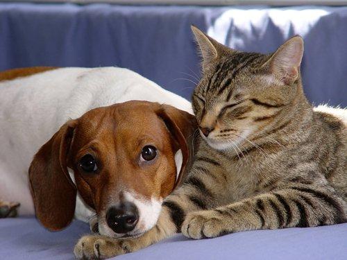 REFORME DU CODE CIVIL RECONNAISSANT LES ANIMAUX COMME DES ETRES VIVANTS ET SENSIBLES