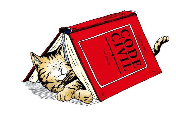 Statut juridique : les animaux reconnus définitivement comme des êtres sensibles dans le Code civil