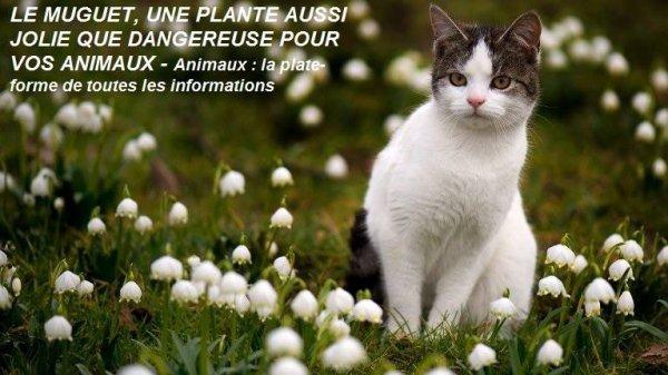 RAPPEL : LE MUGUET, UNE PLANTE AUSSI JOLIE QUE DANGEREUSE POUR VOS ANIMAUX...!
