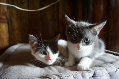 MELKIOR et sa soeur MINNIE