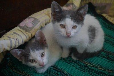 MYRTILLE et MIOU-MIOU