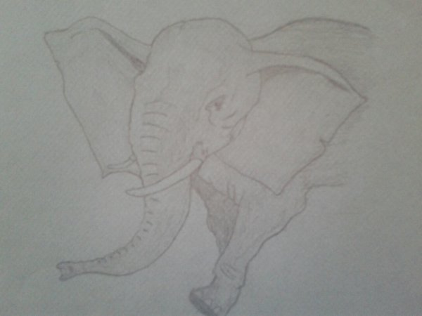 #3 ~Elephant~