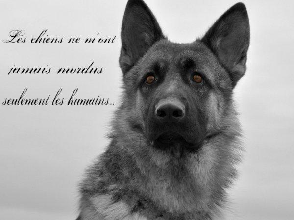 Les chiens ne m'ont jamais mordu, seulement les humains...