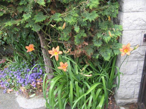 une petite boite .....et les fleurs de mon jardin  c'est agréable de voir les éclosions malgré la pluie