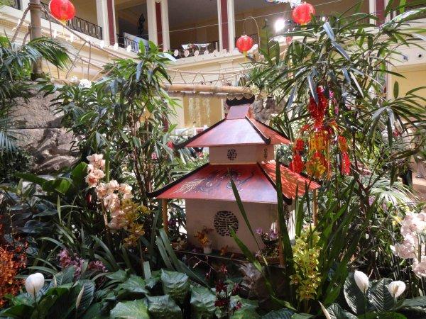 mercredi    les orchidees