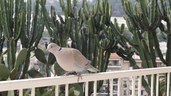 vive les chars et  un copain de balcon hihihi