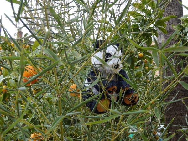 lundi    des pandas ont été demandés les voici   lol et  mon livre acheté sur place