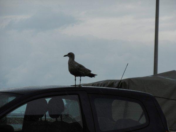 ma sortie normande sur Fécamp hier