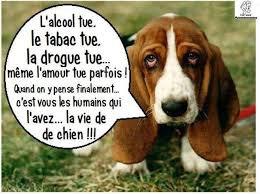 la vie de chien lol