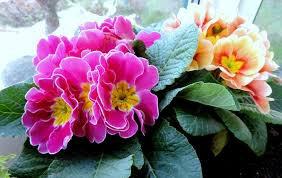 les fleurs du mois de janvier