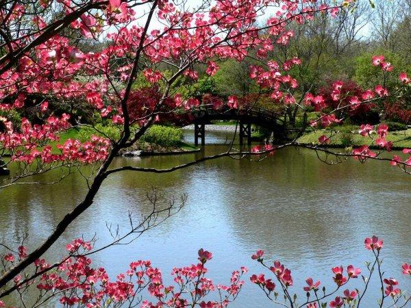 le printemps s'annonce à la fin de la semaine   voilà un peu de couleurs gaies en vue