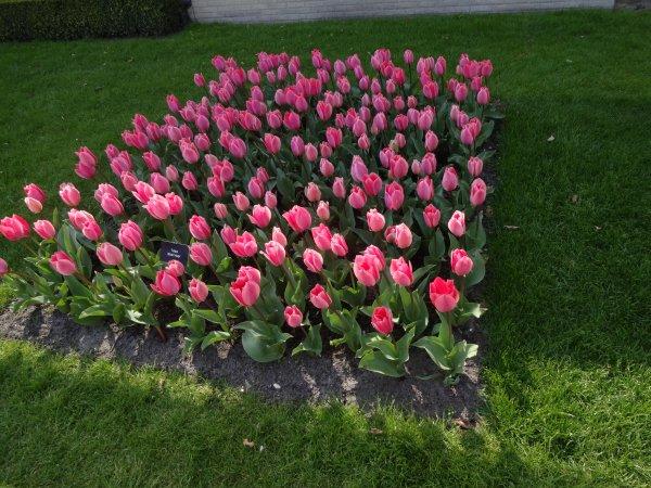 le parc à fleurs en hollande