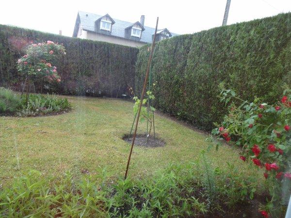le jardin sous la pluie et la grèle