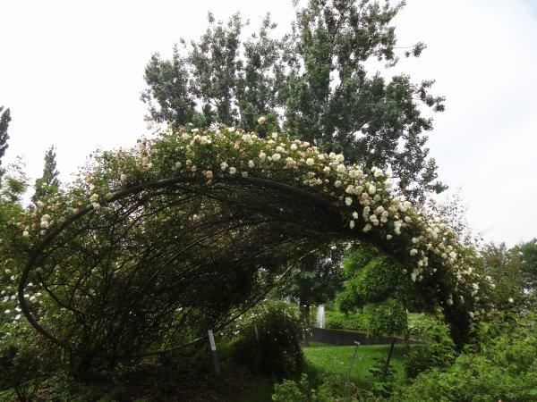 que les fleurs sont jolies dommage que les orages les abiment