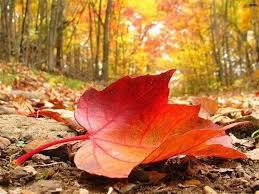 automne es tu bien là    oui je le crois......