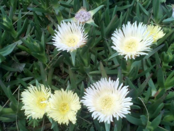 coucou à tous  pleins de jolies fleurs sauvages ici bisous