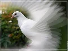 la mort des oiseaux
