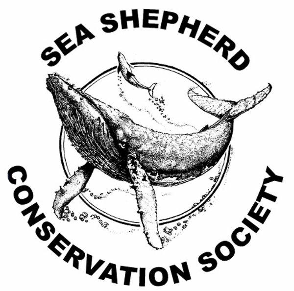 Sea Shepherd écrit au préfet pour superviser les marquages de requins