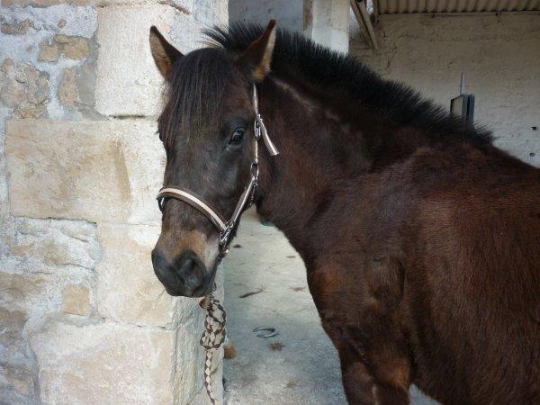 ♥   Notre coeur ne remplace pas un cheval, mais c'est un cheval qui remplace notre coeur   ♥