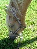 Photo de Secret-Horsesx3