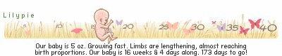 ~ Bebe 16 Semaines ~